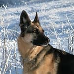Raw Food for Dogs Heals Nine Out Of Ten Dog Health Prolems