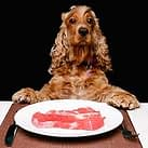 Dogs uncooked food diet