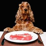 Diet for a dog with cancer