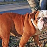 How to Avoid Dog Health Problems Period