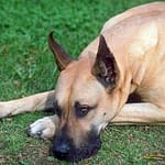 Is Your Dog Licking Its Paws or Hot Spots Excessively? Natural Cure for Life