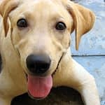 Natural Remedies for Dog Allergies – Dog Acne-Ears-Itching