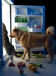 Canine arthritis means fresh food is needed to heal and alleviate