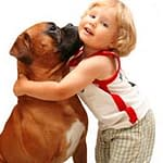 How to Avoid Boxer Dog Health Problems The Simple Way