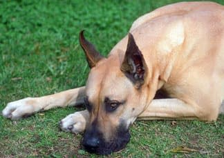 Is Your Dog Licking Its Paws or Hot Spots Excessively?