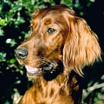 Common Dog Health Problems-Why Dog Behavior Problems Are Misunderstood